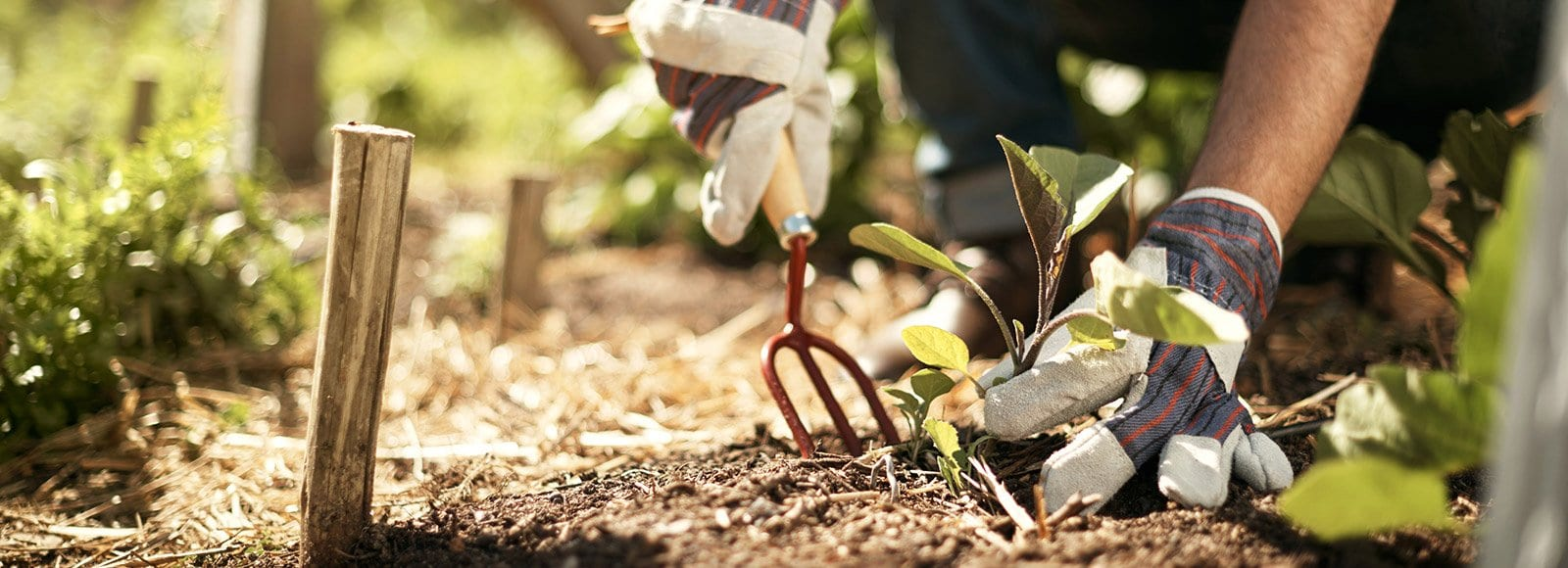 How to Make the Most of the Florida Gardening Calendar